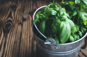 foodiesfeed.com_basil-in-bucket